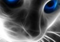 Lmew_Catz