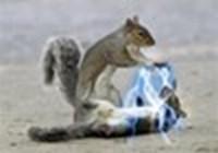 CreativeSquirrel