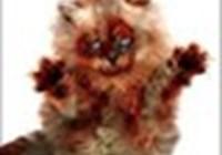 Cat_Luver1998