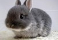 bunnyluver