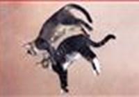 catmom avatar