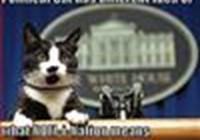 thepoliticalcat