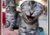 i_love_cats