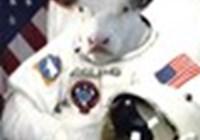 Cosmic-Cow