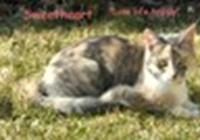 Sweetheartcat123