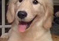 puppysrock