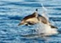 dolphin7255