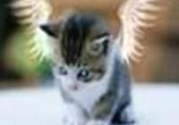 silvercat151
