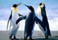 PenguinKid