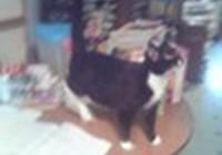kitty99369936