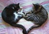 kittensrock12