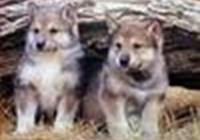 wolvesandcats13