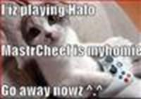 Mastrcheefcat