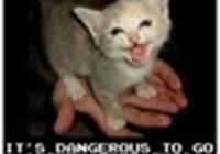 Vampycat