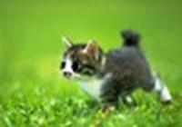 Lolzercats