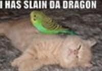 -Mitten_Da_Kitten-