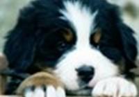 puppyluv890