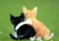 Kitty-Pawz
