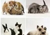 Rosielovecats