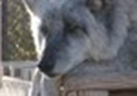 WolfLovesWaffles