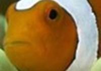 babyfishmouth