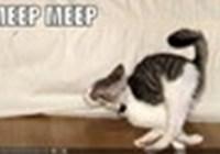 EpicMeep