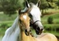 horsewiz12