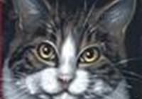 shanamartens avatar