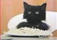 Spaghetti_Cat
