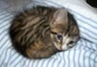 KittyNapz017