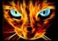 allgo19 avatar