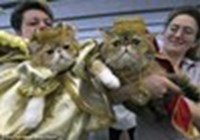 princecat1