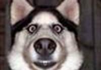 dogsrock