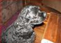 dogg123p