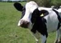 toxic-cow23
