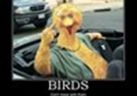 Birdnose