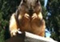squirrlz