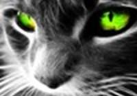 collin23 avatar