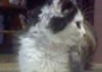 kittykat1994