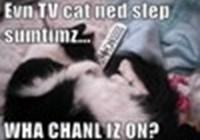 tvcatnedslep