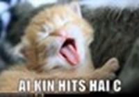 kittycatabc