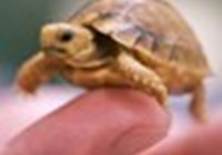 turtlesr0ck