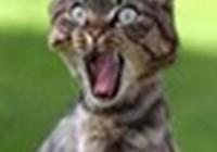 kitty4life