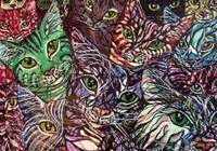 plaidcats