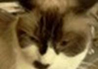 carlsnottheonlycat
