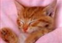kittencloey
