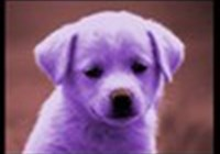 purplepuppy06