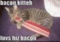 baconkitteh