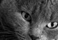 OldGrayWhistletester avatar