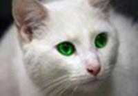 kittykat556